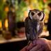 owl cafe in akihabara by Joits