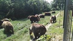 שמורת הדובים