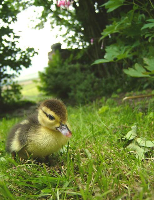 Little fps_duck, Fujifilm FinePix F610