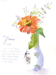 watercolor of zinnia