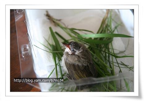 07092006 LittleBird_22