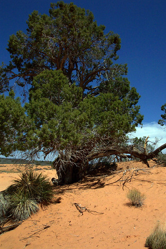 southwest geotagged ut geocache coralpinksanddunesstatepark geolat37061783 geolon112527964 gcn7ny
