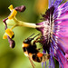 Another passion flower!!! Another bee!!!!!