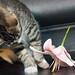 Lilies are Poisonous for Cats:  One by Colour