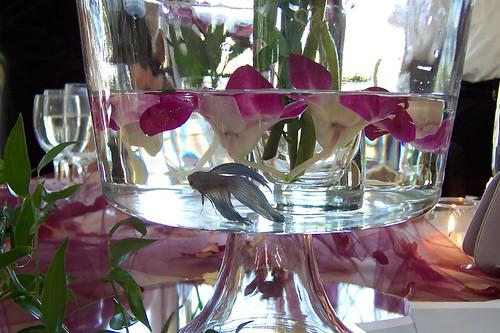 Princess 39 s blog my niece 39s wedding reception for Fish centerpieces wedding receptions