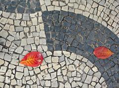 flagstone, cobblestone, walkway,