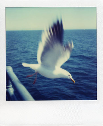 learning to fly, polaroid