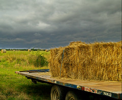 prairie, agriculture, farm, hay, field, vehicle, plant, harvest, rural area,