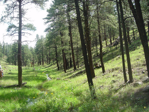 Elevation of hannagan meadow az usa maplogs for Sprucedale ranch