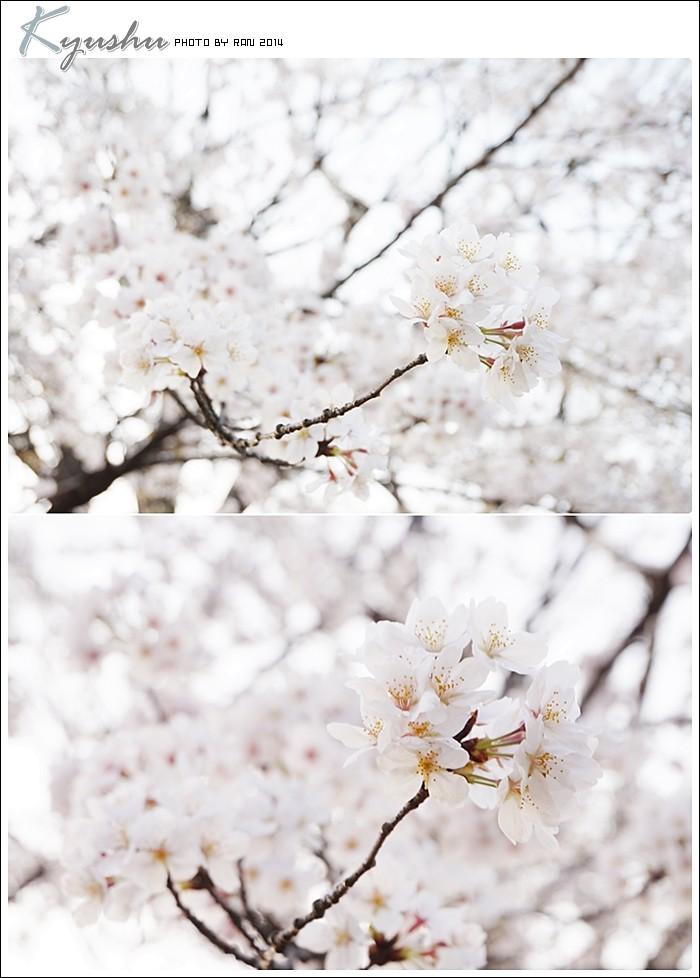 kyushu20140327043