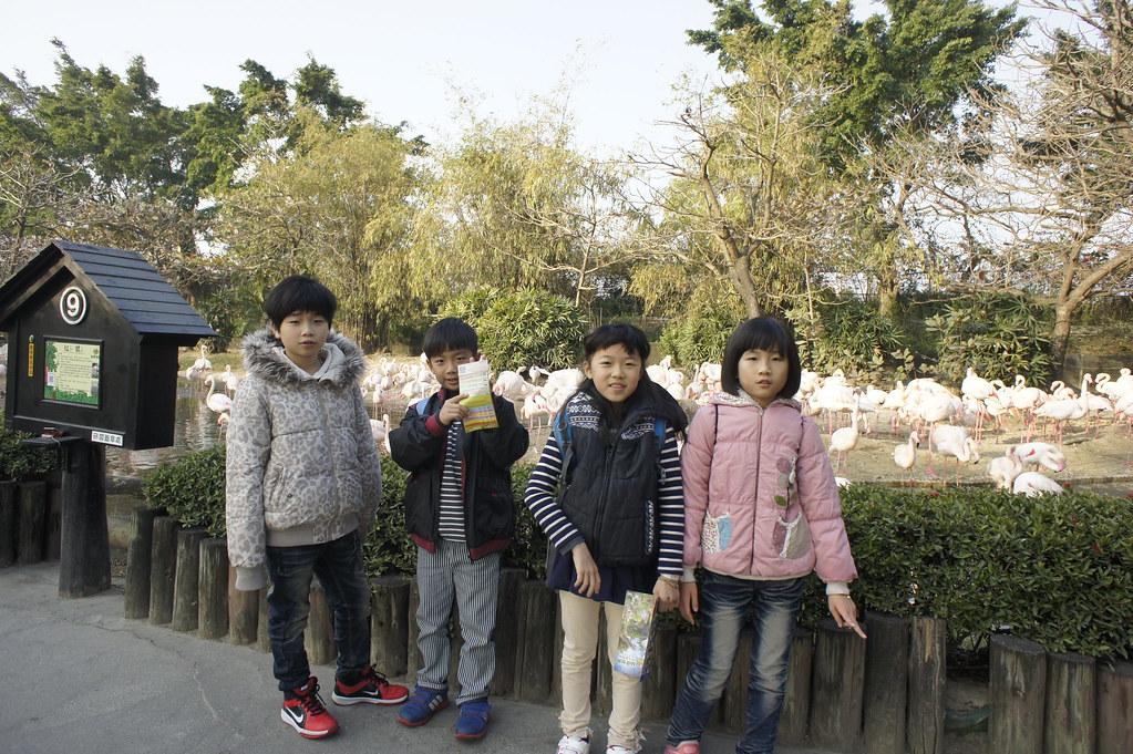 台南市學甲區頑皮世界野生動物園區 (2)