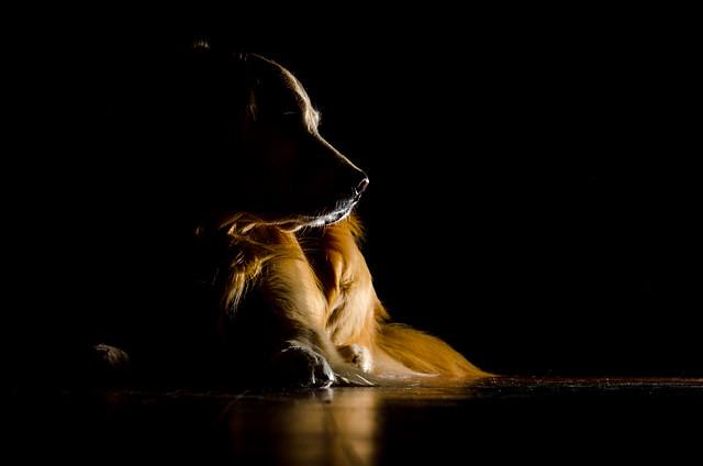 Dog in the Dark