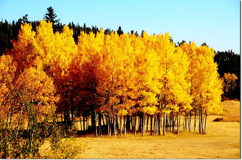 Fall colors by Peak to Peak HWY, Colorado  (12)