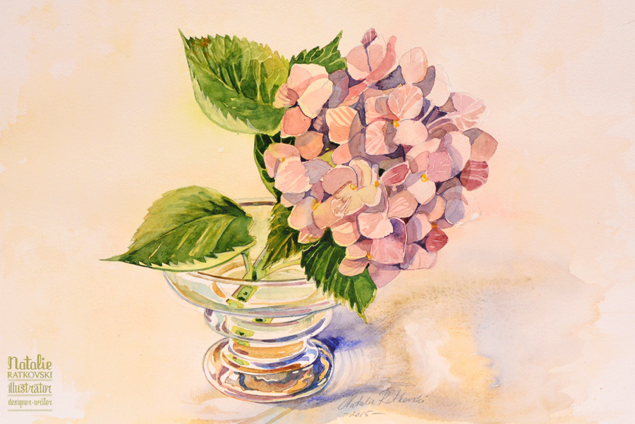 Hydrangea from my own garden