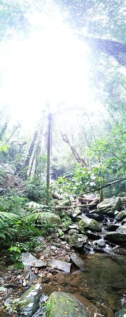 IV - How dark is it in a tropical rainforest? Bobbin Bobbin Falls, Mount Bartle Frere