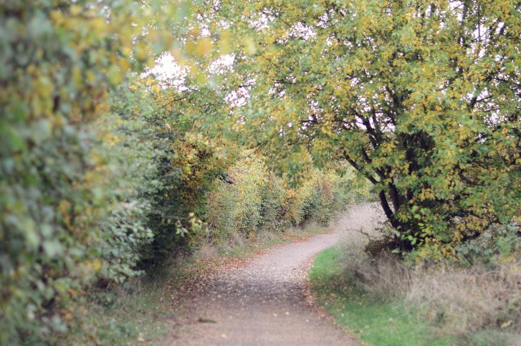 autumnwalk9