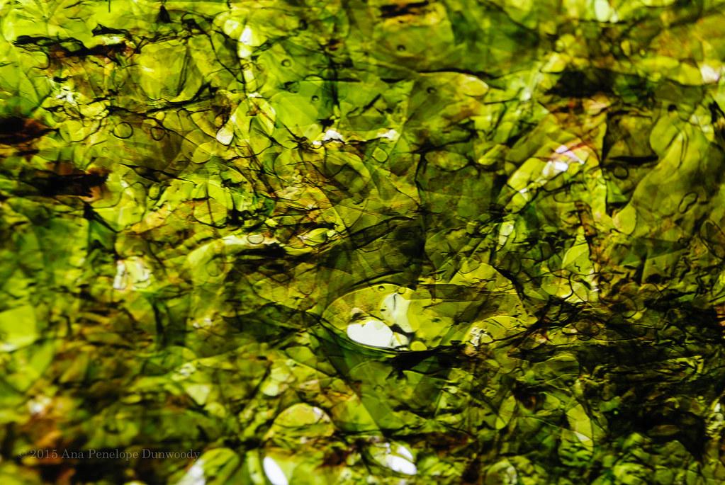 Dried Seaweed Sheet Macro in the Light