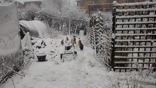 snow on allotment Dec 15