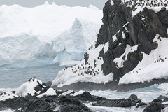 img_3043 Elephant Island 1852