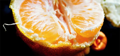 In An Orange Cradle PB020040