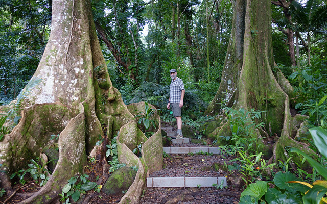 Chris and the buttress tree