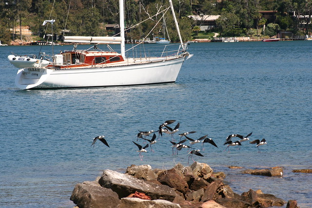 Towlers Bay, Pittwater, Canon EOS 350D