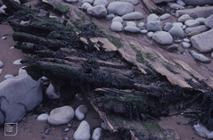 Timbers of wreck outside Aberthaw lagoon, October 1982