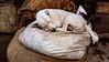 Sleeping Slumdog by François aka Tweek