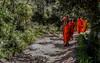 Path to Nirwana