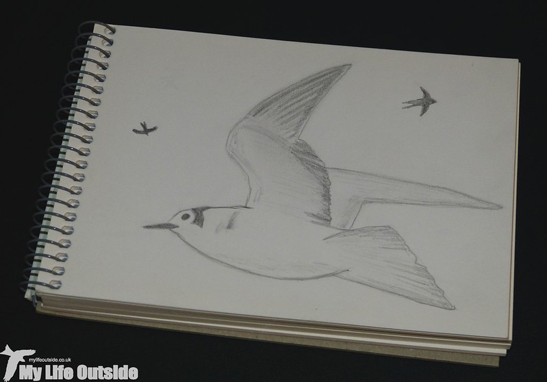 P1150584 - Black Tern Sketch from Fendrod Lake