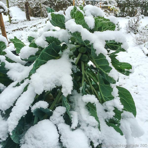 Rosenkohl im ersten Schnee