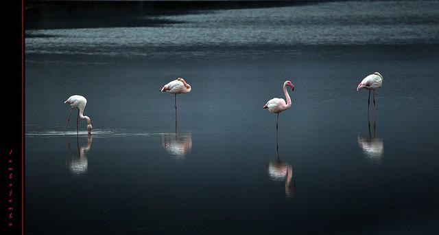 Si fa sera in padule - It's evening in marsh