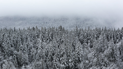 snow winter issaquah nature clouds trees forest washington pacificnorthwest canoneos5dmarkiii canonef2470mmf28lusm cloudy tigermountain