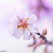 Back to Spring by frederic.gombert
