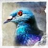 The Rock Dove by ulli_p