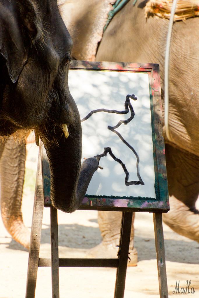 Elefant Malt Sich Selbst Maetamann Elephant Camp Chiang M Flickr