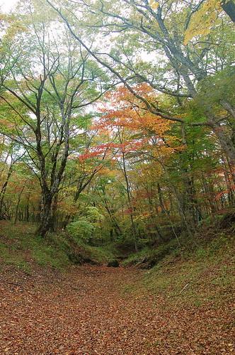 ★森の秋★富士山から・・・