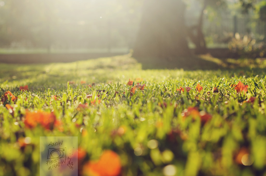 Day 270.365 - Mornings in Lal Bagh