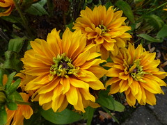 Yellow Flowers !