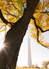 Fall Leaves Around the Washington Monument
