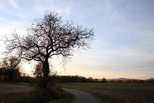 Singular tree