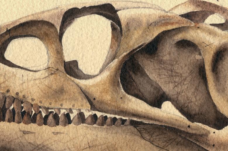 Archosaurus_780_