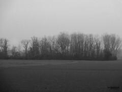 La nebbia dalle nostre parti