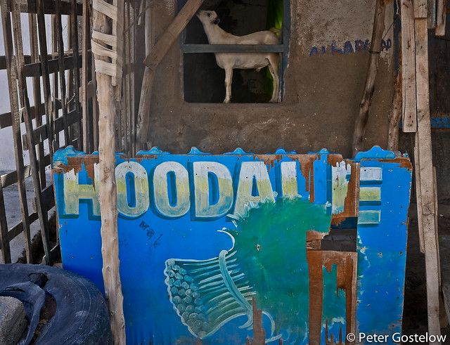 Qat stall and goat