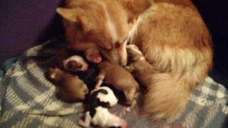 7 puppies