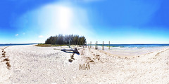 Pine Island Tampa Bay Sandy Beach Dead Tree - IMRAN™ (Interactive Virtual Reality 360°x360°)