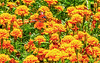 Bright Flowerbed by elluckyphoto