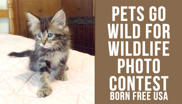 wild-for-wildlife-born-free