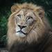 Cincinnati Zoo 8-26-15-9978 by joemastrullo