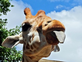 Apr 2009 - Up close & personal at the zoo, Taronga Park, Sydney, NSW, Australia